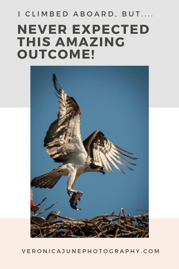 Osprey PIN image