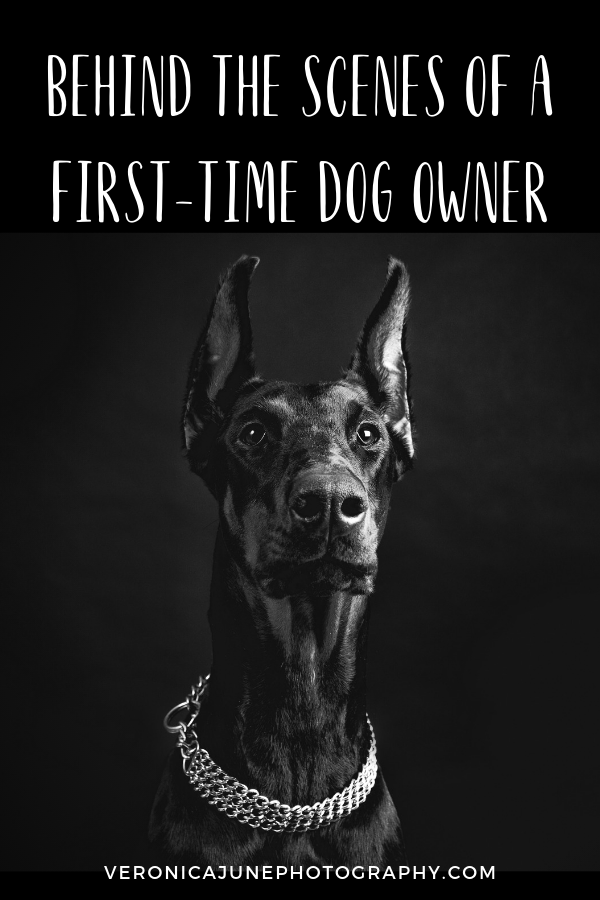 Pin Image for Behind the Scenes of a First-Time Dog Owner