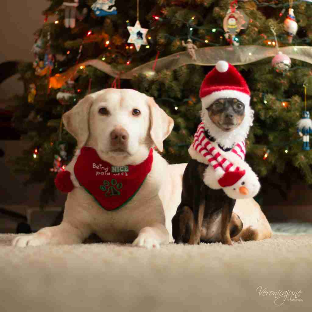 Pic of Reba and Dolly in Christmas Clothes