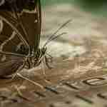 butterfly on placard picture