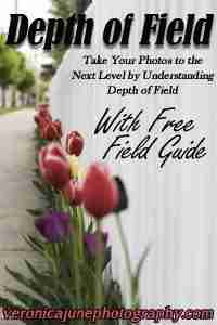 Take Your Photos to the Next Level by Understanding Depth of Field