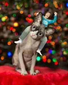 Author riding her Bald Cat