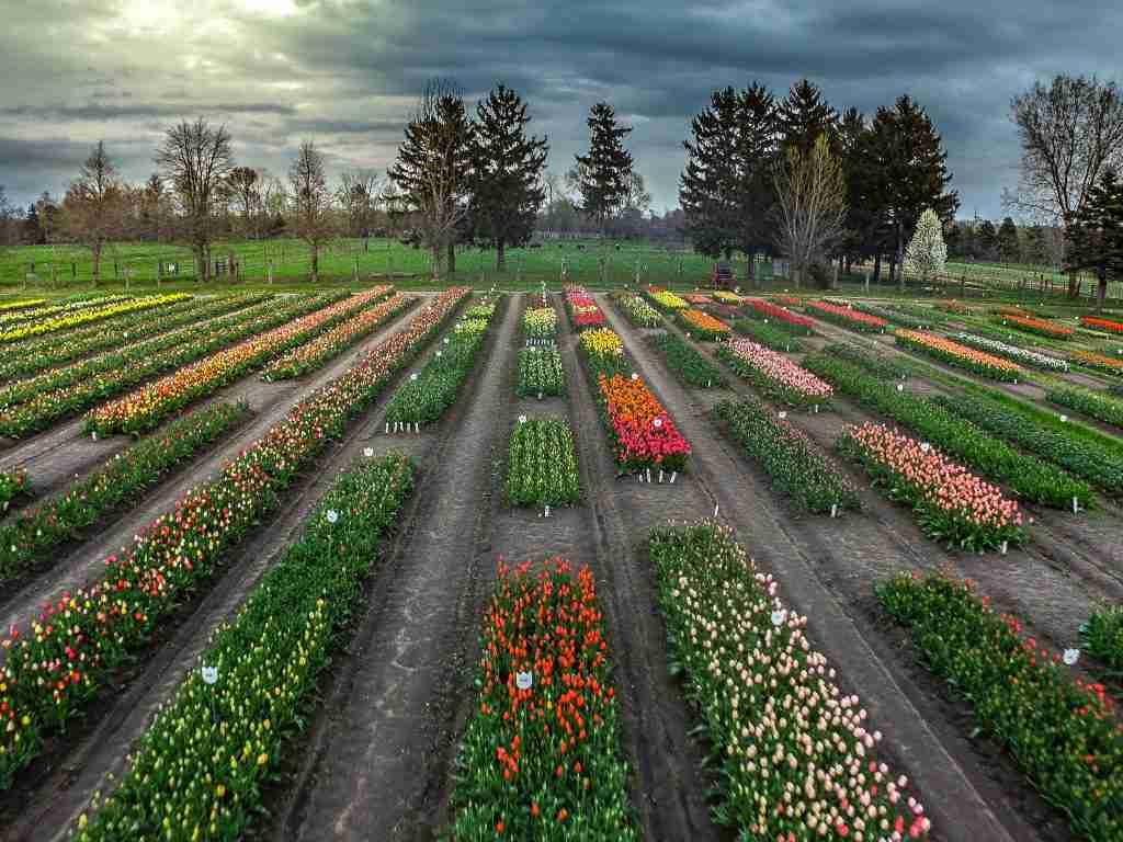 Portrait-Photographer-Holland-Michigan-Veldheer-Drone-Photo
