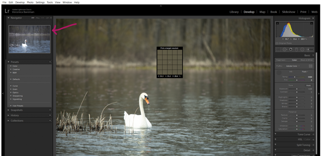 Lightroom Screenshot with swan and arrow pointing to preview window