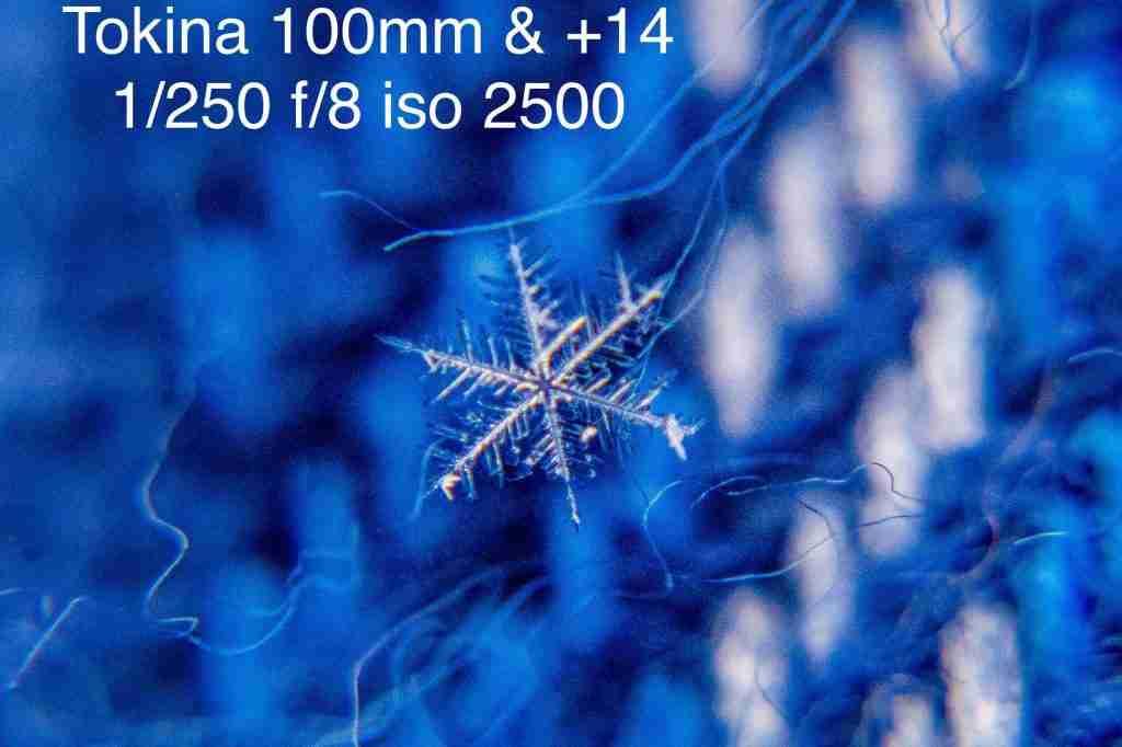 White macro snowflake on a blue background